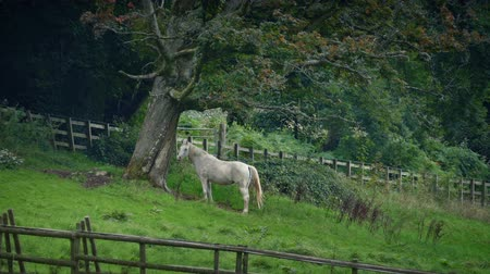 hides : Horse Sheltering Under Tree In The Countryside