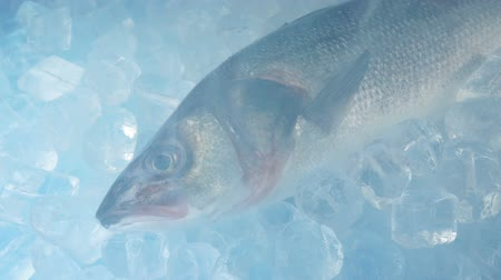 cavala : Large Fish Frozen With Icy Vapor Vídeos