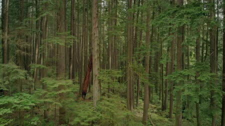 flying upwards : Flying Up Past Forest Trees Stock Footage