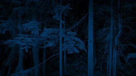 кедр : Moving Up Tall Trees In The Woods At Night Стоковые видеозаписи