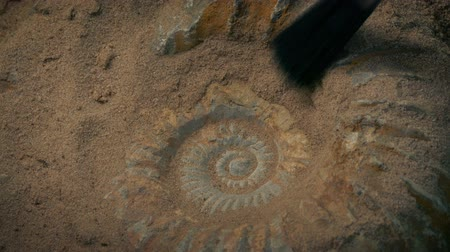 dino : Prehistoric Of Sea Shell Ammonite Being Excavated Stock Footage