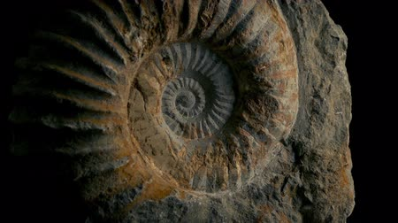 caracol : Passing Large Ammonite Prehistoric Stock Footage