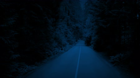 Ванкувер : Rising Up Through Trees Above Forest Road At Night