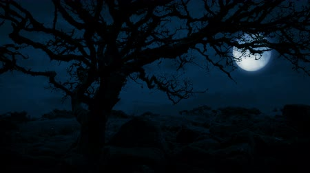 ветреный : Twisted Old Tree On Hilltop With Moon Behind