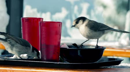 flasks : Birds Eating Left Overs On Table Outdoors