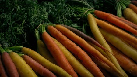 промывали : Different Colored Fresh Carrots Стоковые видеозаписи