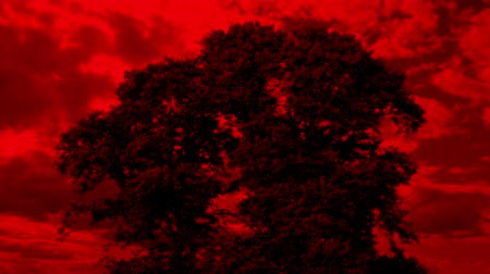 sways : Tree With Apocalyptic Red Sky