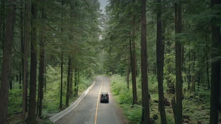 arborizado : Car Passes Through Forest Aerial