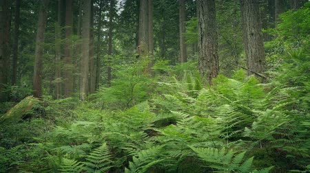 ferns : Ferns In Verdant Forest