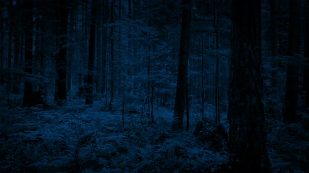 meia noite : Flying Through Dense Woodland In The Dark