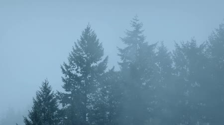 wilds : Forest Trees In Thick Mist