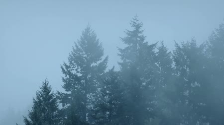 komor : Forest Trees In Thick Mist