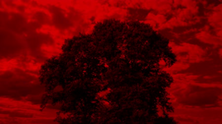 bibliai : Tree With Apocalyptic Red Sky
