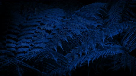 ogród : Woodland Ferns In Gentle Breeze At Night