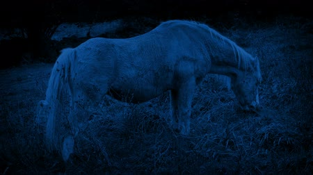 poník : Horse Grazing In The Country At Night