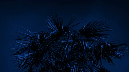 námořní : Tropical Palm Tree In Strong Winds At Night
