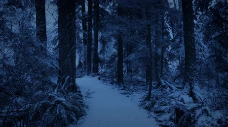 snows : Forest Path In Snowfall At Dusk