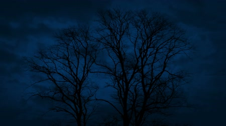 alguns : Trees With Clouds Passing At Night