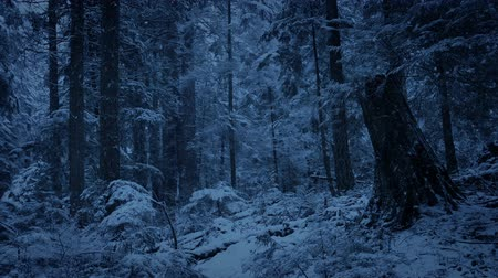 snows : Forest Slope With Snow Falling In The Evening