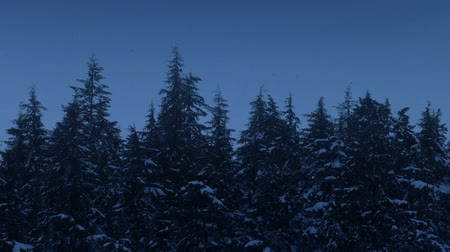 snows : Snowfall On Tree Tops At Dusk