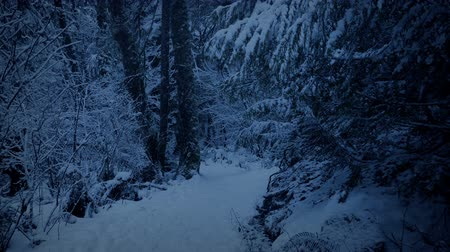 snows : Snowy Path Through The Woods At Dusk Stock Footage