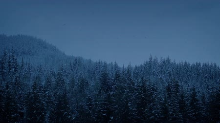 snows : Snowfall In Mountain Forest At Dusk
