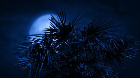 typhoon : Palm Tree In Strong Winds At Night Stock Footage