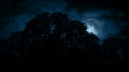 bushy : Scary Full Moon Over The Woods Stock Footage