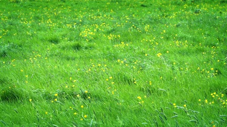 çimenli : Meadow With Yellow Flowers In The Sun