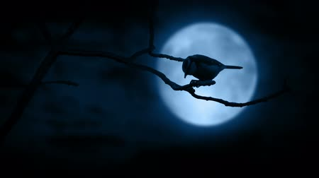 bahçe : Bird Pecking On Branch In Front Of Full Moon
