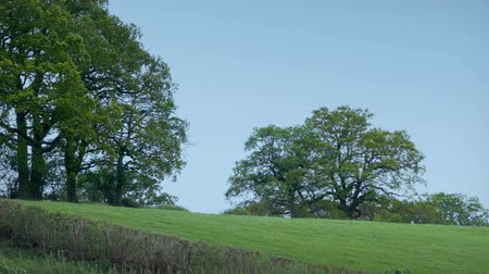 travnatý : Field With Large Trees In Windy Rural Landscape Dostupné videozáznamy