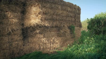 hay pile : Straw Bales In The Field