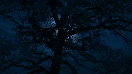 Moon Glowing Behind Large Tree On Stormy Night Stok Video