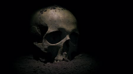 Old Skull Is Revealed By Digging Through Soil Above