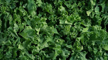 jarmuż : Pile Of Kale Vegetable Rotating