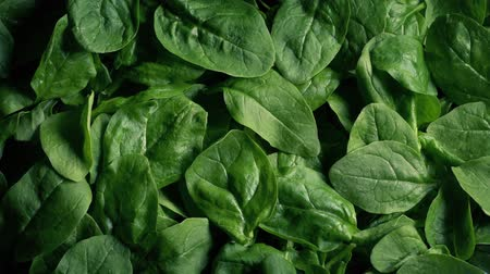 super bowl : Pile Of Spinach Vegetable Rotating Stock Footage