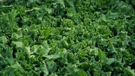 jarmuż : Kale Fresh Vegetable Moving Shot