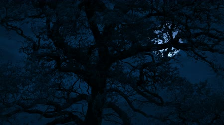 Scary Moon Behind Tree On Stormy Night Stock mozgókép