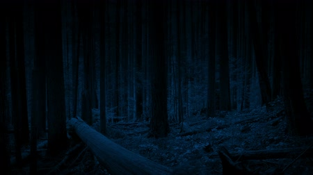 Moving In The Woods At Night