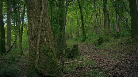 Rural Woodland Path Moving Shot Stock Footage
