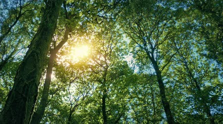 doğa : Sun Glows Through Tree Canopy