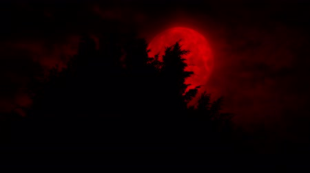 wróżba : Scary Red Moon Rises Behind The Trees Wideo