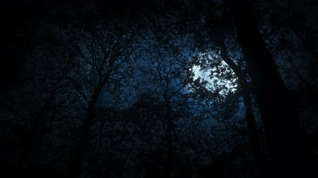 Moon Behind Dense Forest Trees