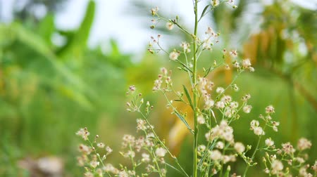 lightweight : Dolly slide dry white small flower in nature place Stock Footage
