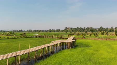 instabil : Drone shot aerial view scenic landscape of vitage and old bamboo bridge in the fresh and nature rice field, The old contryside