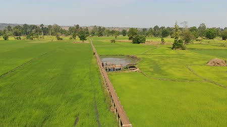 the suspension bridge : Drone shot aerial view scenic landscape of vitage and old bamboo bridge in the fresh and nature rice field, The old contryside