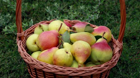 organic : Organic apples and pears in a basket outdoor Stock Footage