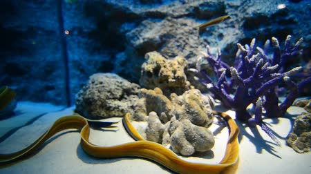 napfény : Coral Reef and Tropical Fish in Sunlight