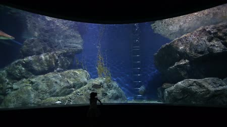 wieloryb : Childeren observing fish at the aquarium