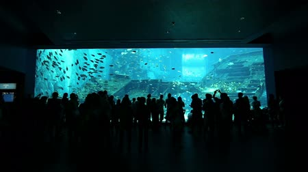 фотосъемка : silhouettes of people against a big aquarium, Worlds largest acrylic aquarium tank  Стоковые видеозаписи